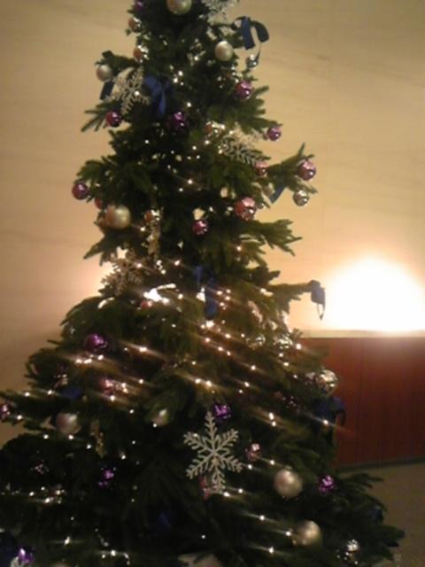 クリスマスツリーの季節!
