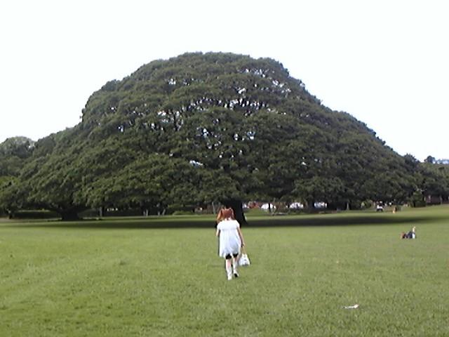 この〜木なんの木!