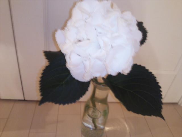 白紫陽花のある部屋!