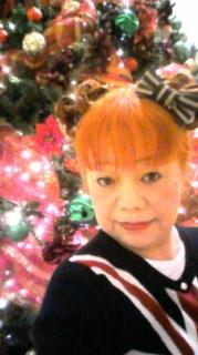 ハワイのクリスマスツリー!