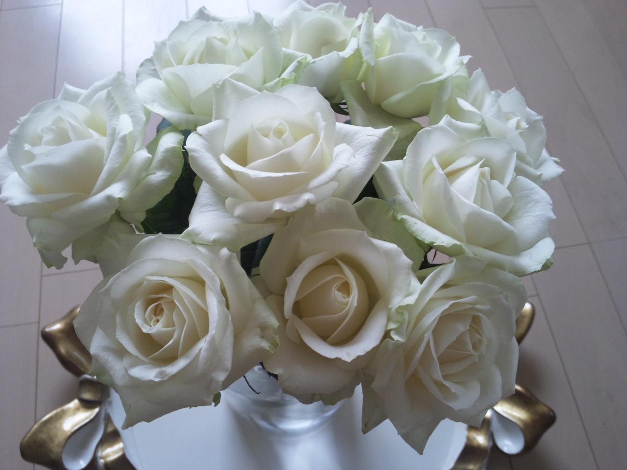 白薔薇アバランシェ!