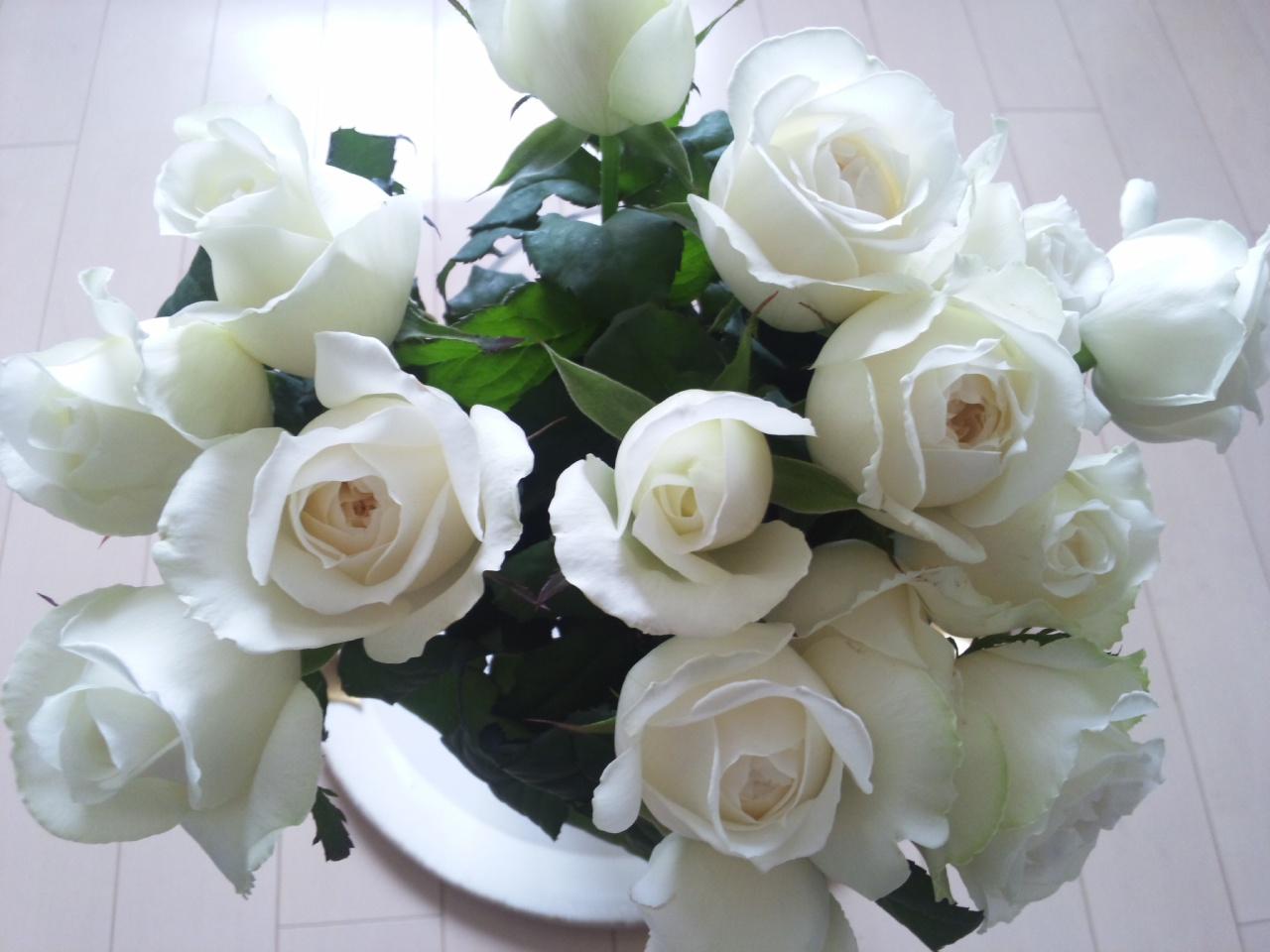 白薔薇シェドゥーブル!